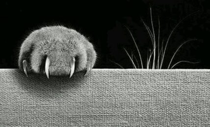 Griffe de chat menaçant un tissu fragile...