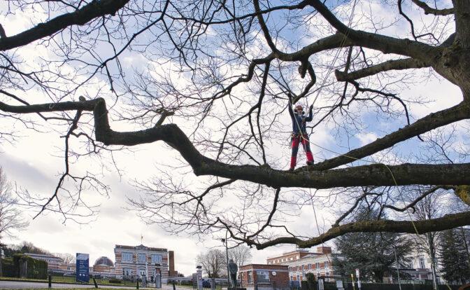 Guillaume Briel dans un arbre face à l'Observatoire