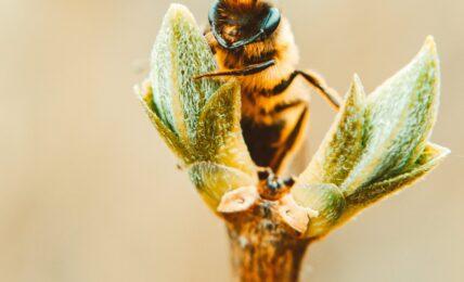Une abeille si utile et précieuse