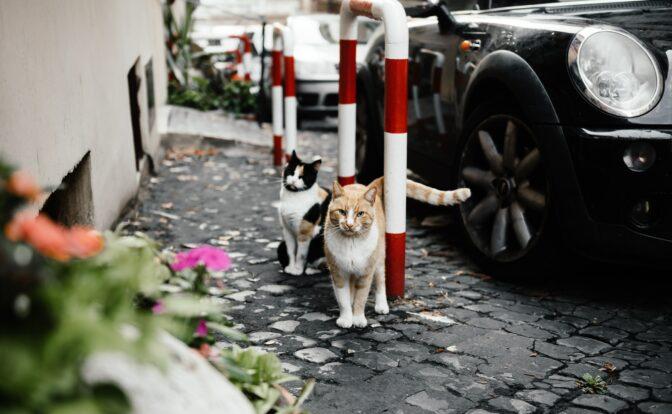 Chats en rue